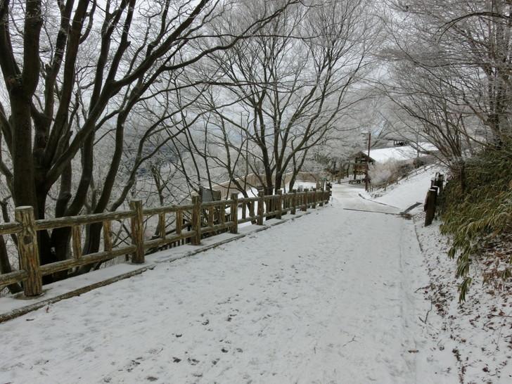 ちはや園地までの遊歩道も雪で真っ白