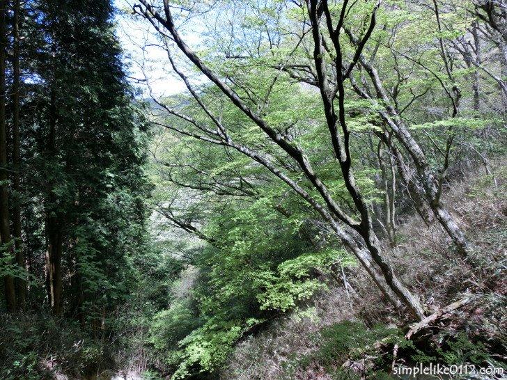 金剛山千早本道ルート・5合目から谷を見下ろす