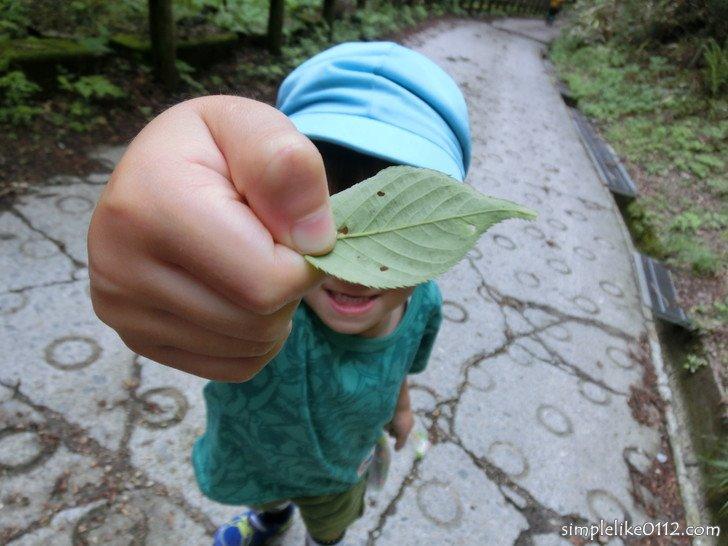 金剛山念仏坂を登る