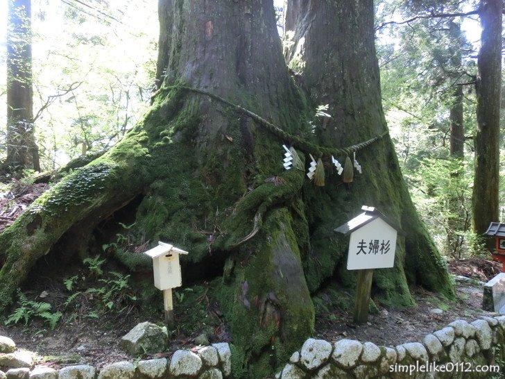金剛山葛木神社の夫婦杉