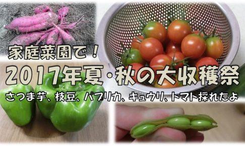 2017年夏秋野菜収穫アイキャッチ画像