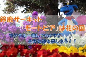 鈴鹿サーキット花写真アイキャッチ画像