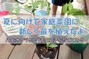 夏野菜の苗を植える