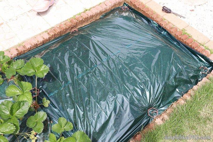 家庭菜園にマルチングを張る