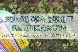 芝生専用除草剤シバキープエースシャワーの効果