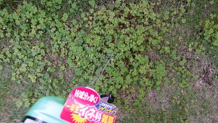 芝生専用除草剤シバキープエースシャワーの使い方