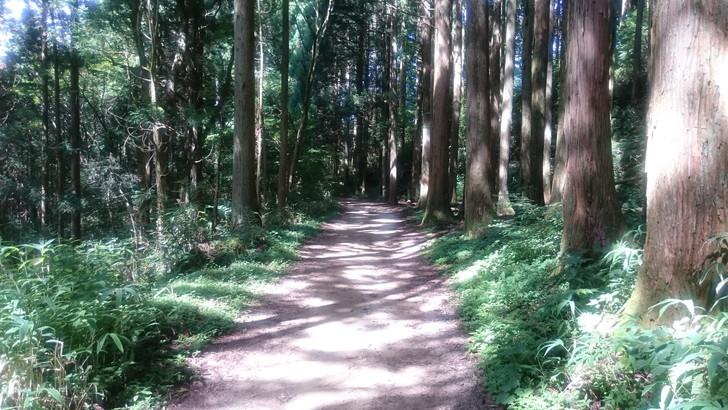 金剛山遊歩道
