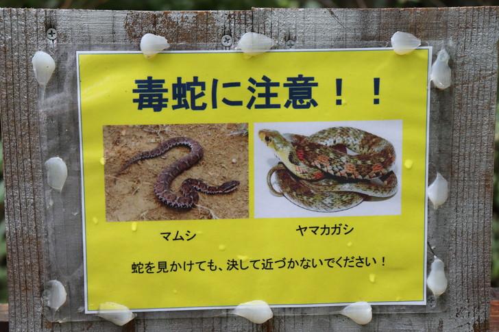 金剛山ロープウェイ付近にいる毒蛇