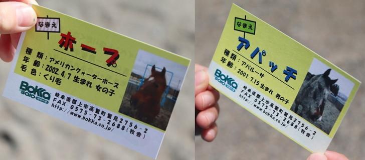 乗馬記念にもらったウマさんの名刺