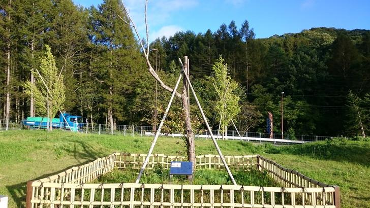 標高日本一「松ノ木峠PA」荘川桜