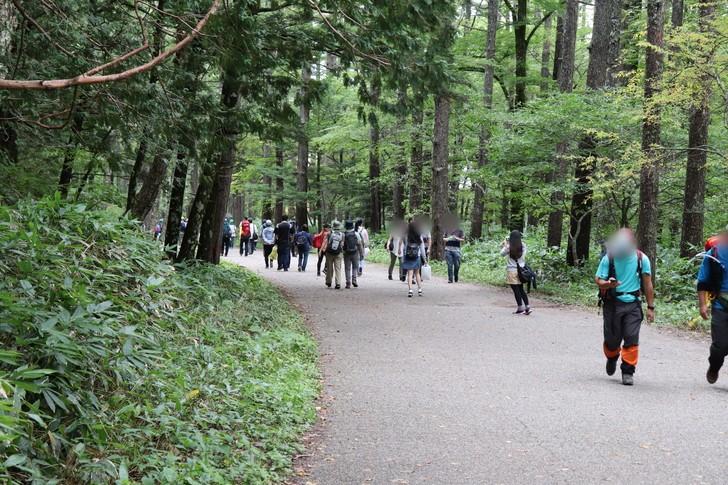 上高地バスターミナルまで林間コースを行く