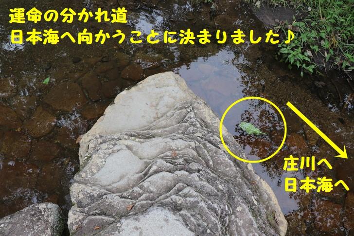 岐阜県ひるがの分水嶺公園の楽しみ方