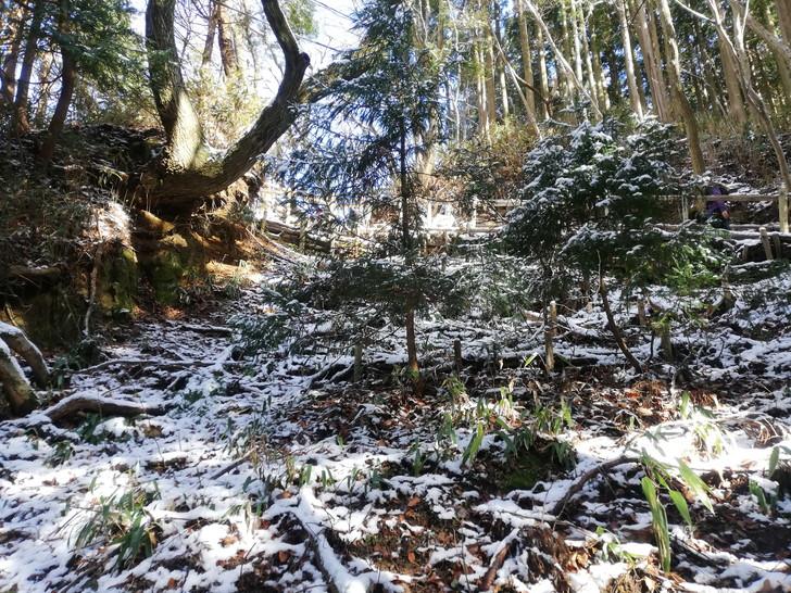 冬の金剛山千早本道が雪で真っ白に!!