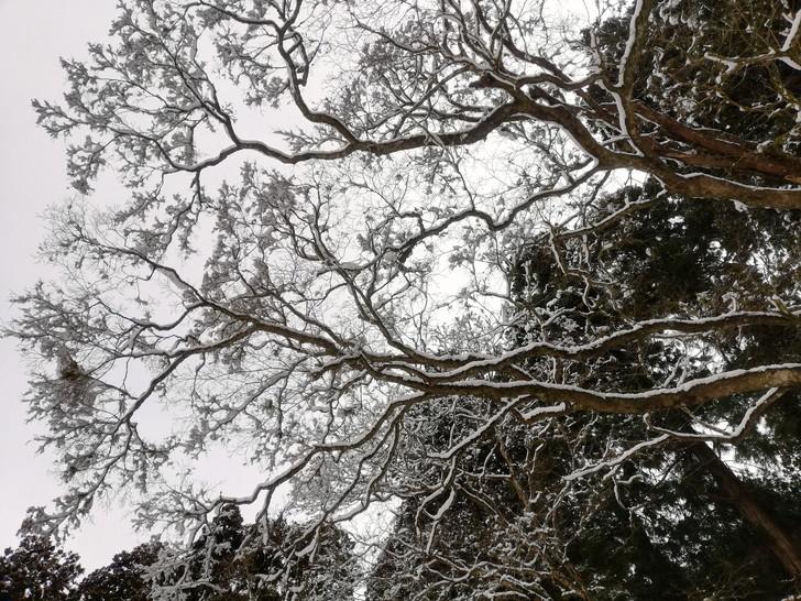 冬の金剛山・風雪が作りだす樹氷