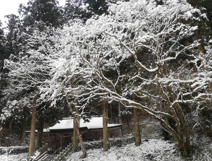 冬の金剛山・美しい樹氷