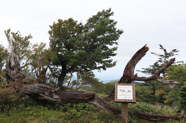 四国剣山の「刀掛けの松」