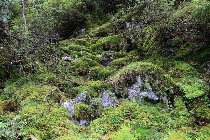 四国剣山の森林限界近くのようす