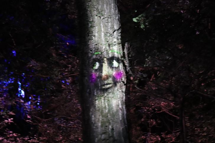 ナイトウォーク火の鳥・しゃべる木